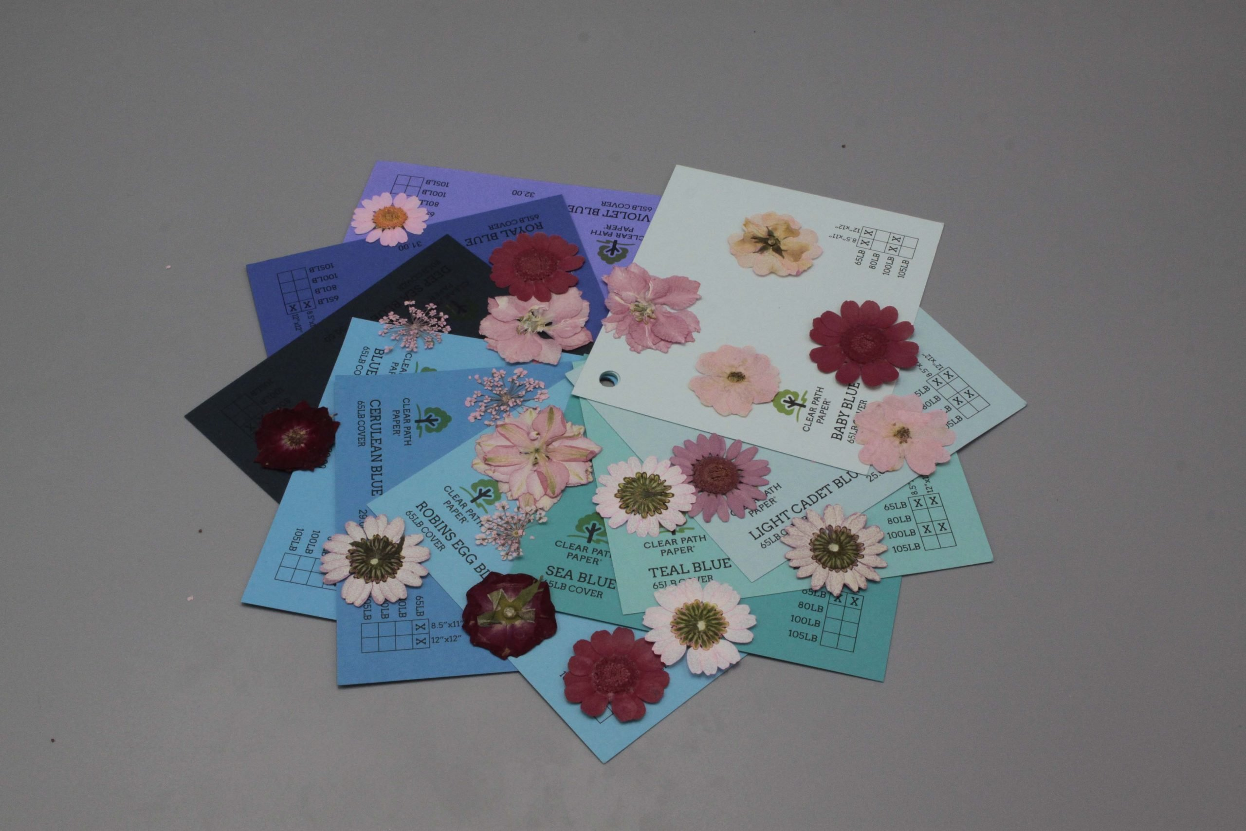Image of Dreamtop Dried Flowers with blue cardstock