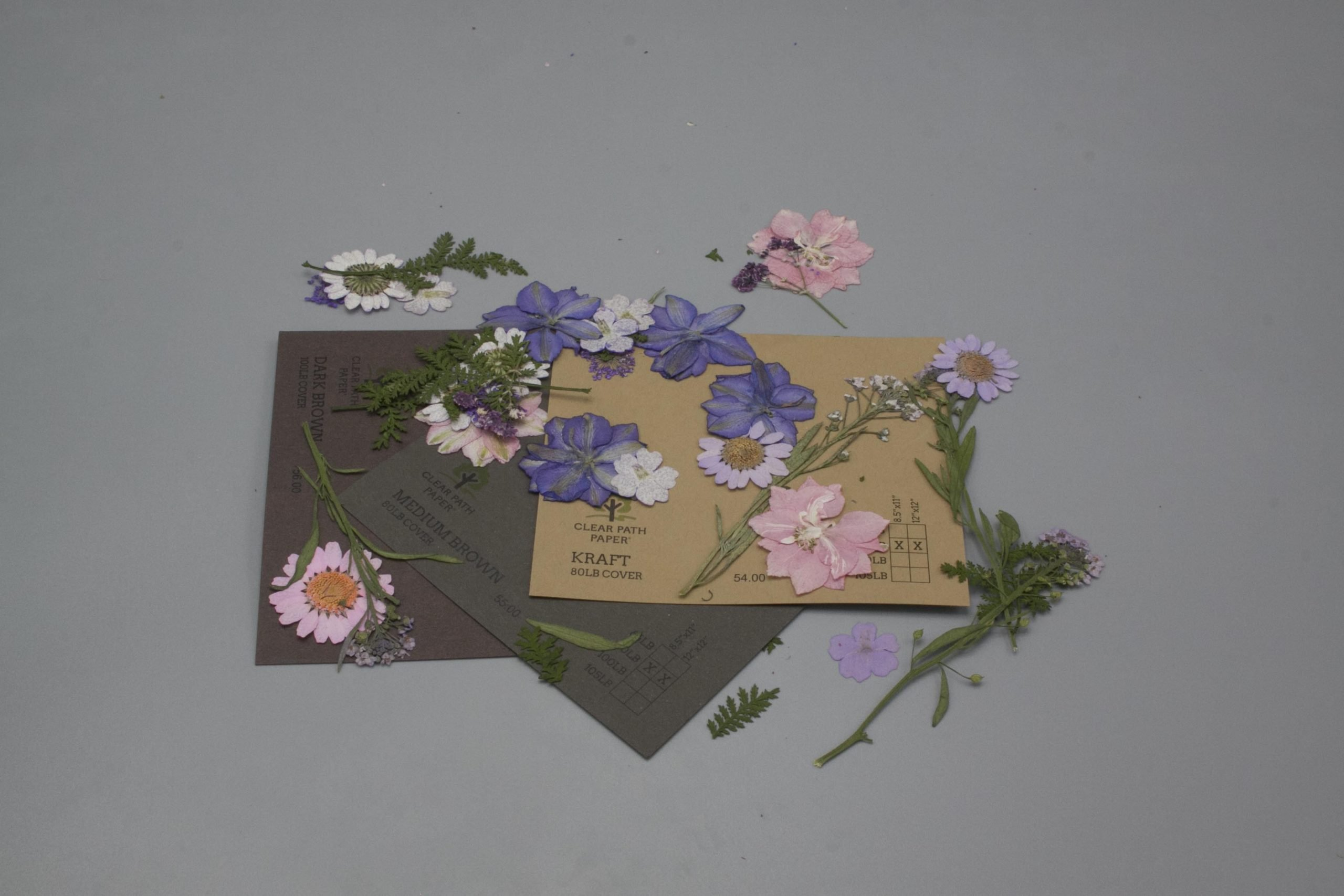 Image of Dreamtop Dried Flowers with Brown Cardstock