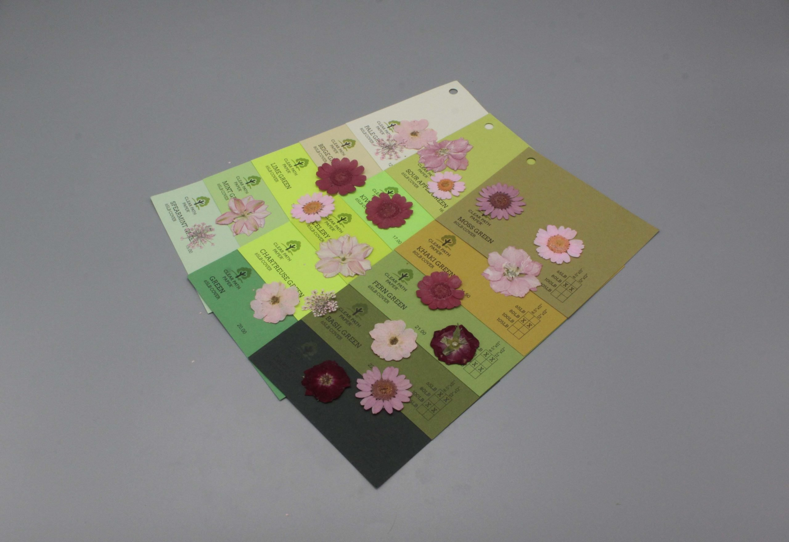 Image of Dreamtop Dried Flowers on Green Cardstock
