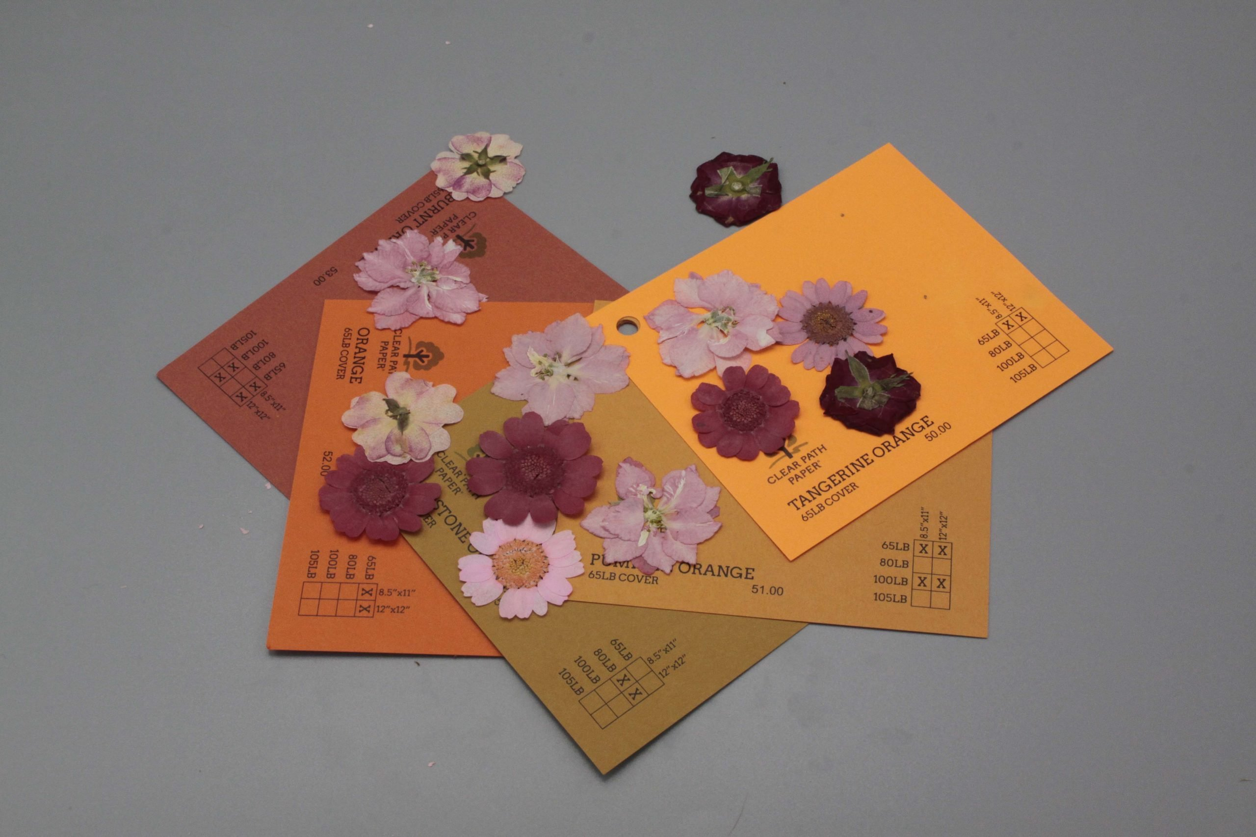 Image of Dreamtop Dried Flowers with Orange Cardstock