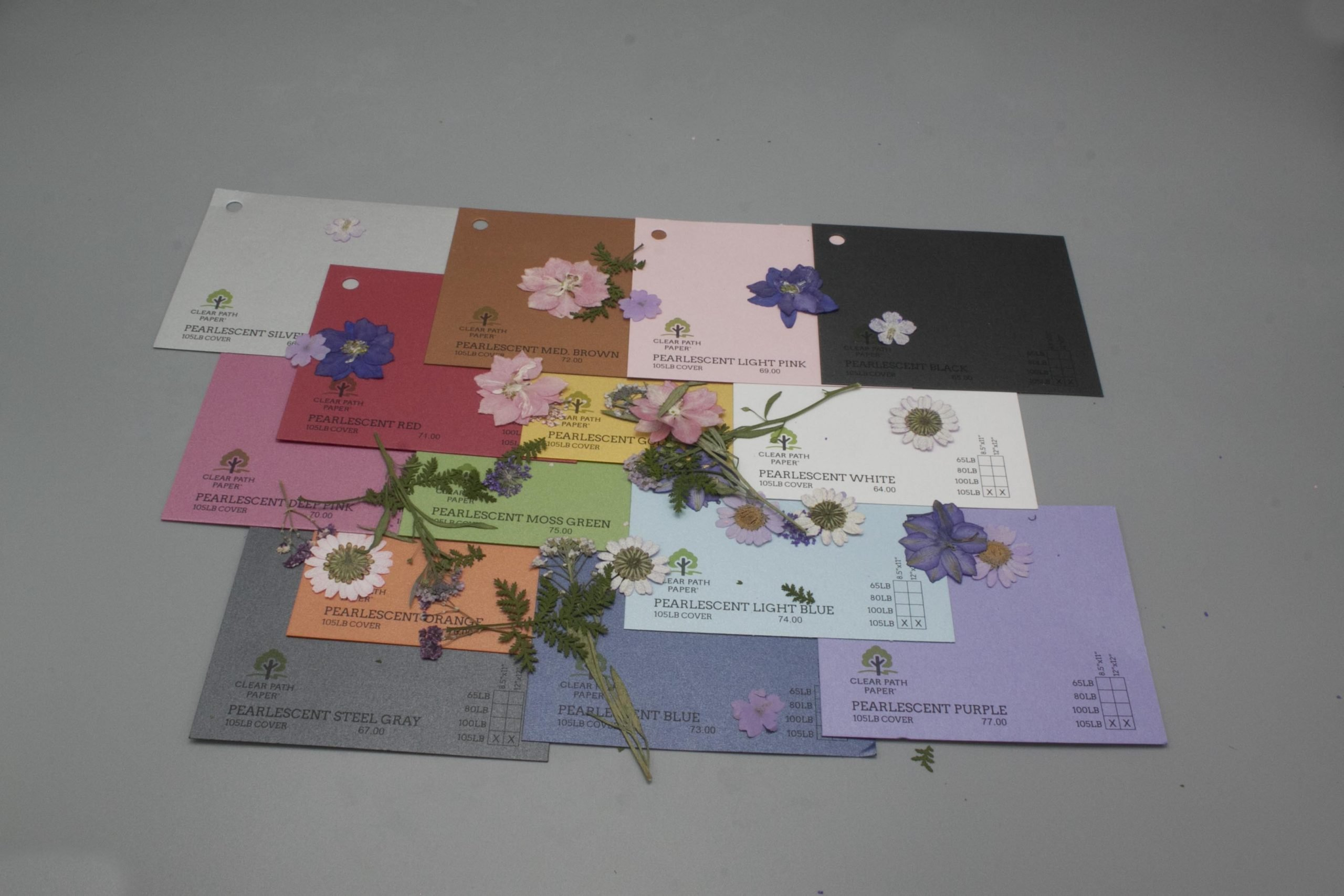 Image of Dreamtop Dried Flowers with Pearlescent Cardstock
