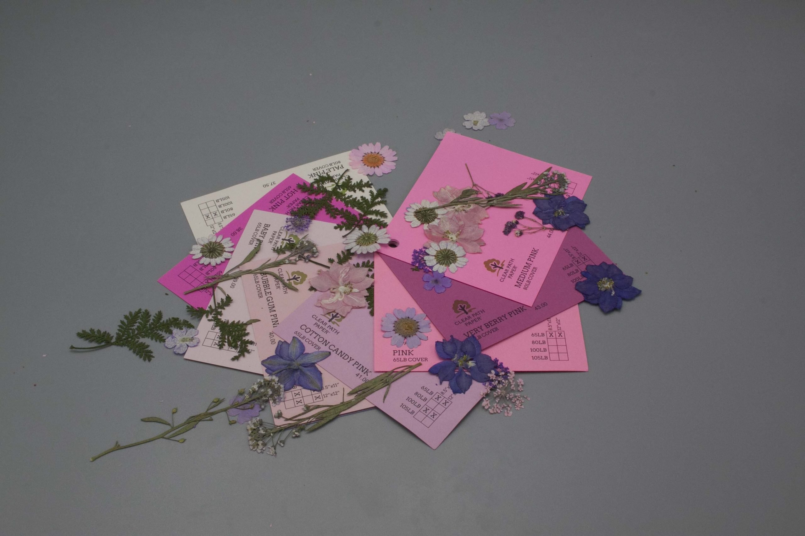 Image of Dreamtop Dried Flowers with Pink Cardstock