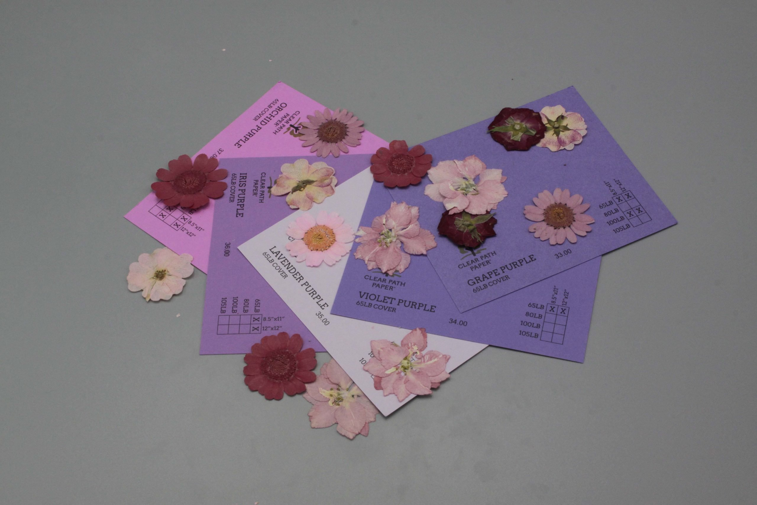 Image of Dreamtop Dried Flowers with Purple Cardstock