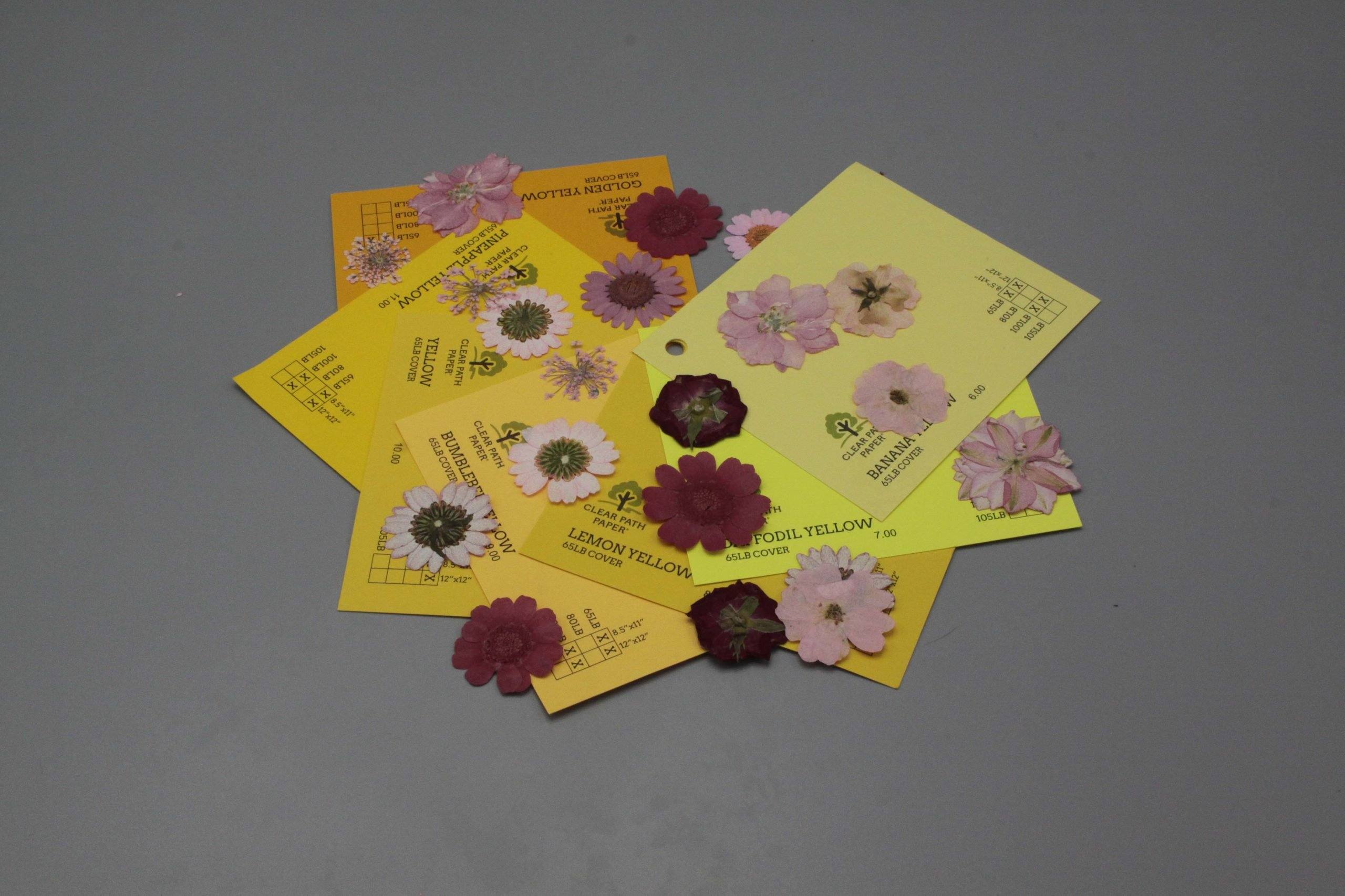 Image of Dreamtop Dried Flowers with Yellow Cardstock